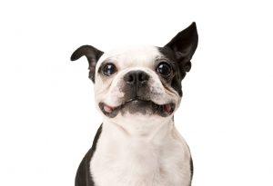 APP dog