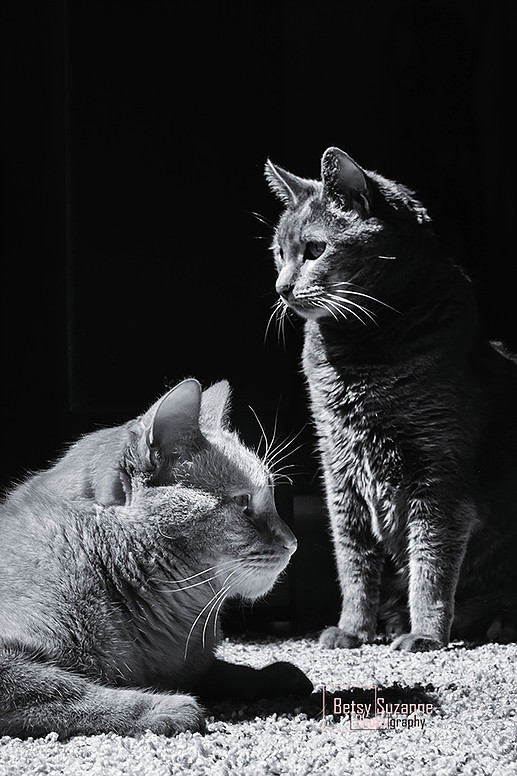 Pet Photography Of Two Cats